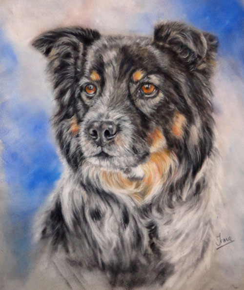 Border collie painting in pastels