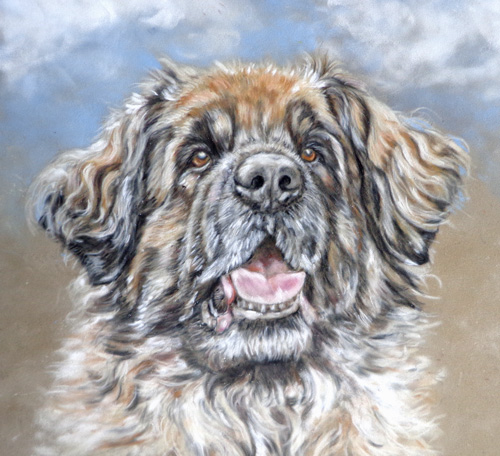 leonberger in pastels painting