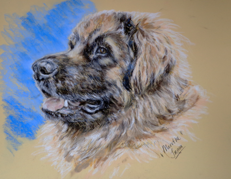 pastel drawing of our leonberger